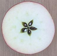 An apple cut in half across the middle showing five point symmetry.